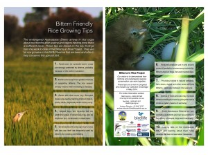 Bittern Friendly Rice Growing Tips 2014
